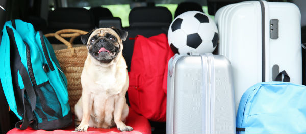 Your bags are packed and you're ready to go