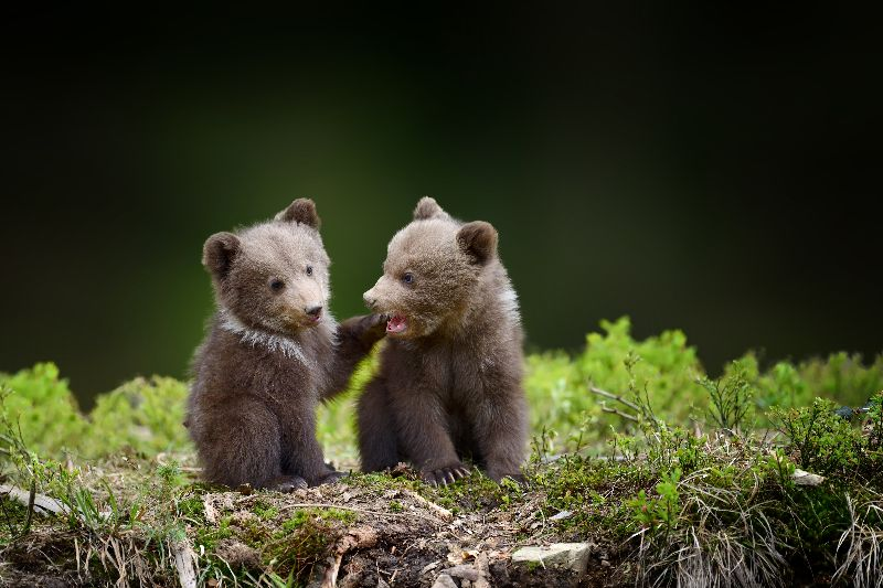 You might even spot baby bears.
